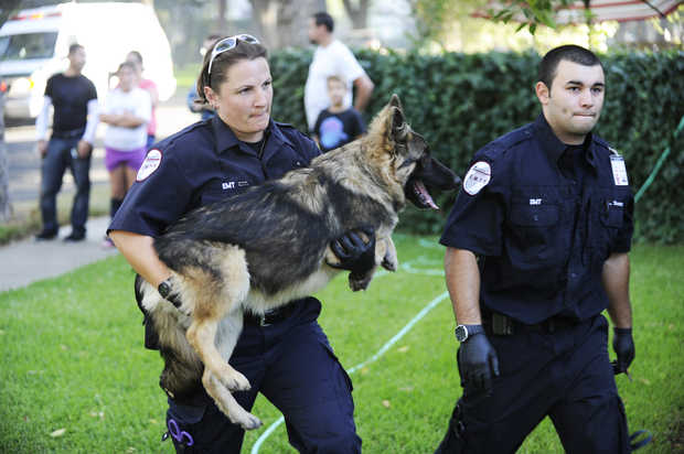 Firefighter Rescue German shepherd from Burning House