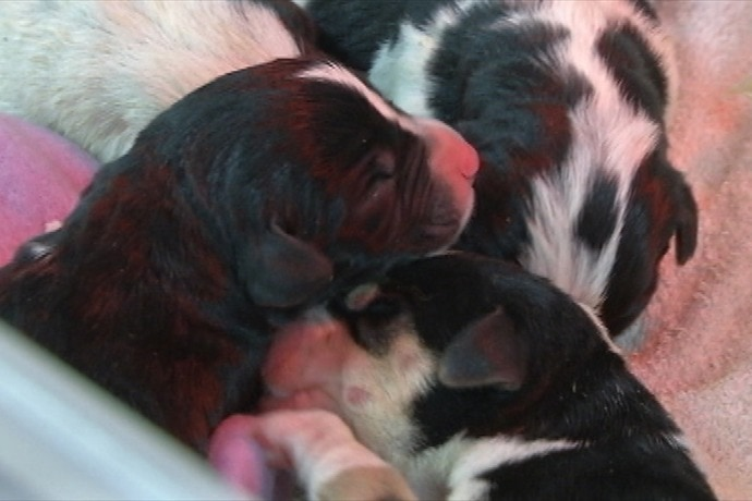 "Five ""Garbage"" Puppies Rescued from Side of Road"