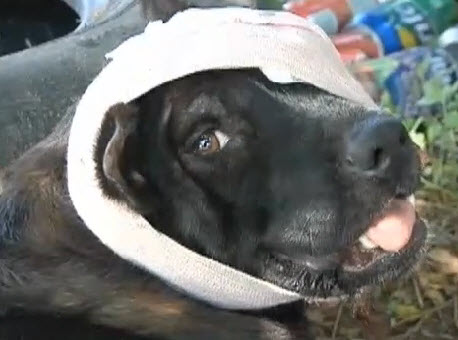 Dogs Brutally Attacked with Machete Are on the Mend