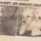 Dog Snatcher Extorts Dog Owner