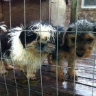 Over 100 Dogs Rescued from N.C. Puppy Mill