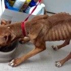 Dog Owner Charged with Animal Cruelty after Malnourished Attic Dog Gets Rescued