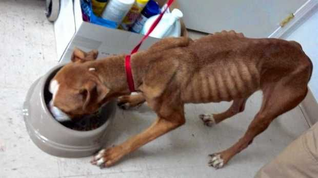 Dog Owner Charged With Animal Cruelty After Malnourished
