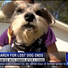 After Five Years Lost, Dog Comes Back Home