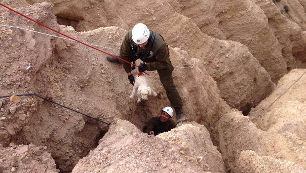 Chilean Police Officers Rescue Dog from Ravine