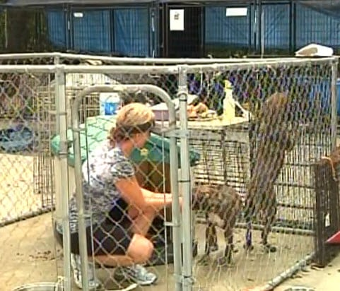 Trespassers Open Dog Kennels in Animal Shelter Forcing Dogs to Fight