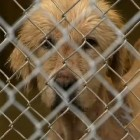 Breeder Neglects Pets and Gets Arrested