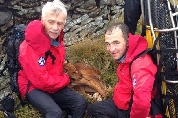 Rescue Team Saves Dog with Broken Leg