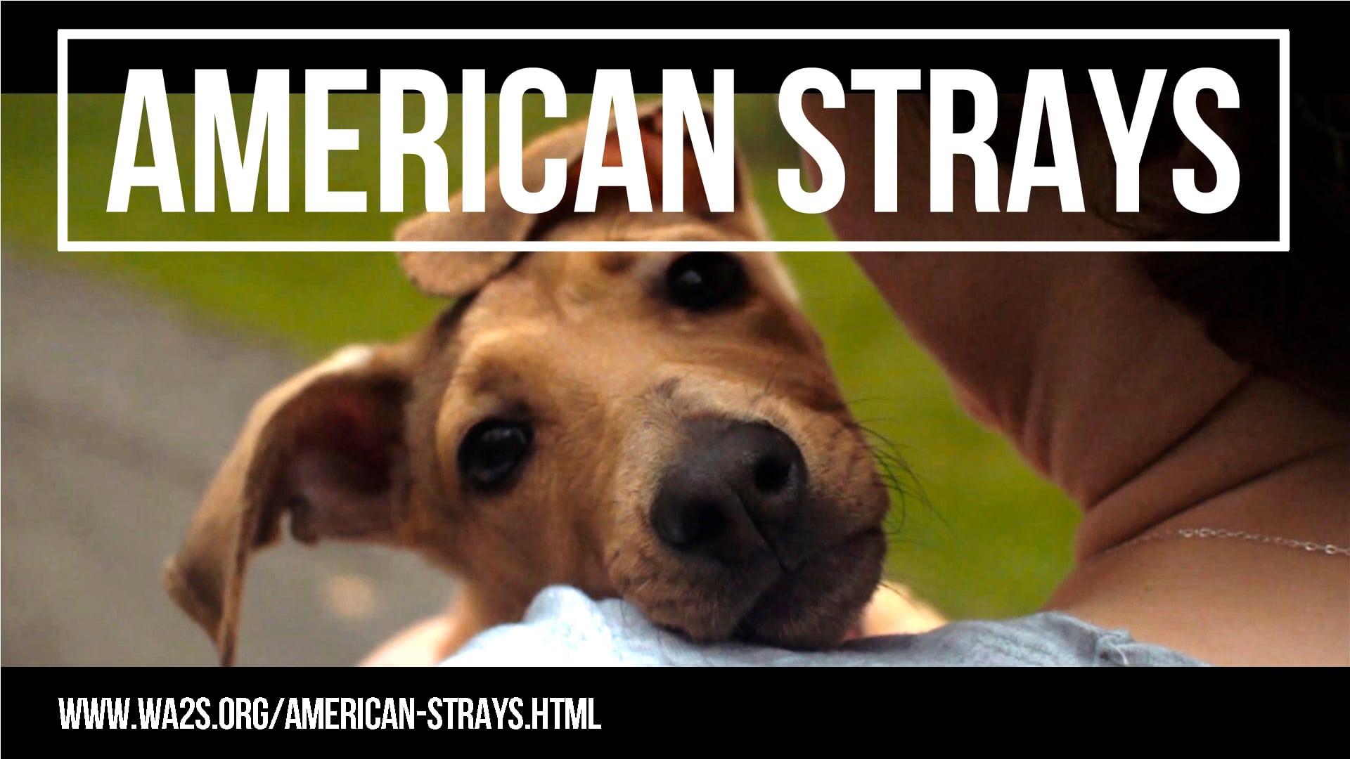 Rescue Organization Revolutionizing Animal Welfare in Detroit