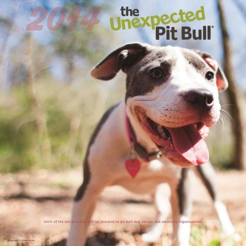 Pit Bull Rescued From Imminent Euthanasia Becomes Calendar Cover Model