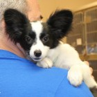 Over 80 Dogs Rescued From Puppy Mills in OK & In Need of Homes