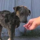 Rare and Beautiful Video Dedicated to LA Rescue's Work