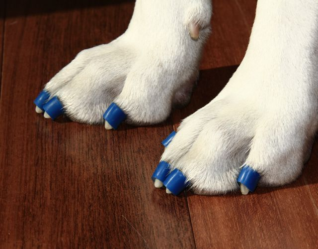 Dr. Buzby's ToeGrips: Stopping Dogs From Sliding on Floors