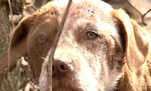 Film Captures the Rescue of a Terrified and Injured Dog