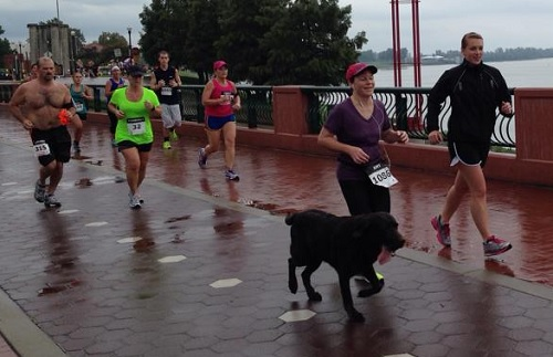 Lost Dog Runs Half-Marathon