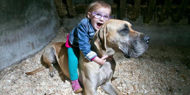 Great Dane Shares Special Bond with Toddler and Helps Detect Her Seizures