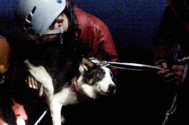 Sheep Dog Rescued from Crevice by Veterinarian