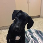 Puppy Able to Stand Again after Being Shot in the Back