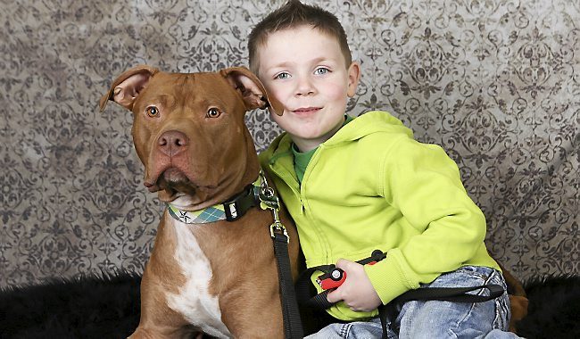Foster Dog Saves 4-Year-Old Boy's Life