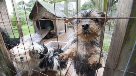 Dozens of Dogs Rescued from North Carolina Puppy Mill