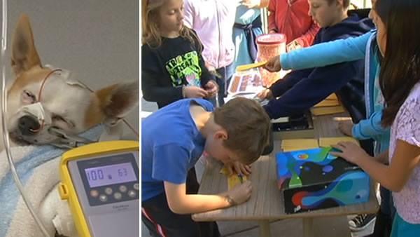 Children Raising Money for Dog Injured by Drunk Driver