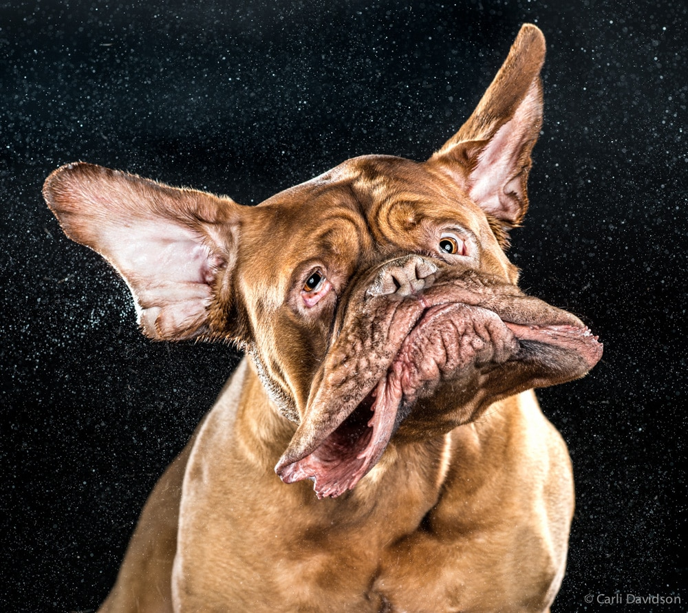 Photographer's New Book Captures Dogs Mid-Shake