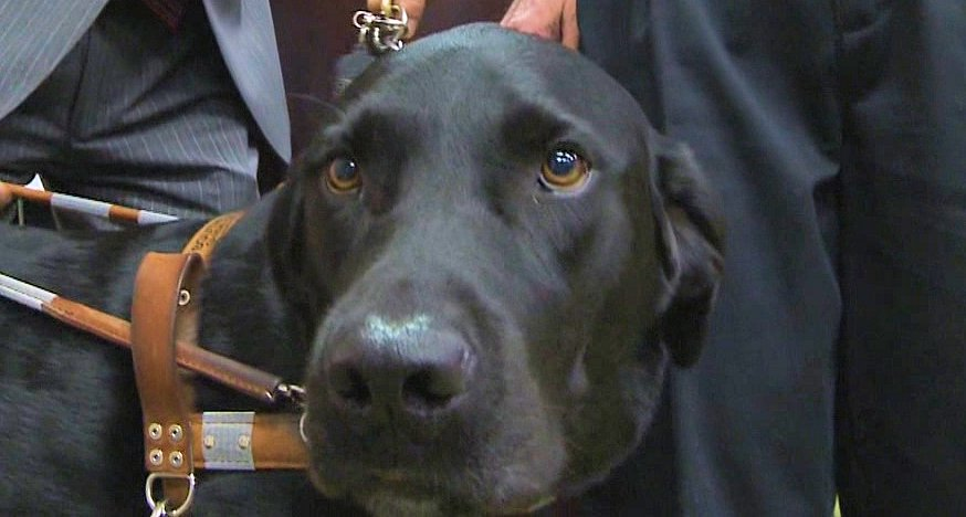 Guide Dog Honored with Medal of Valor