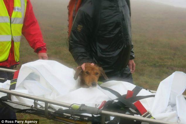 Dog Rescued after Being Stranded for Weeks