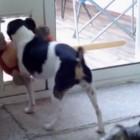 Dog Toy vs. Dog Door