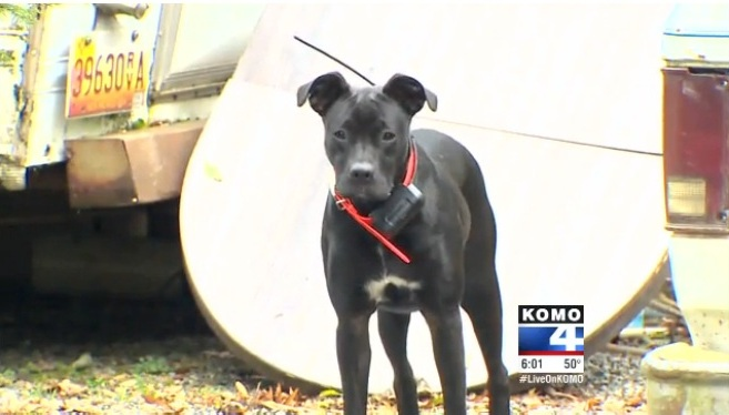 Rescue Dog's Discovery Initiates Murder Investigation