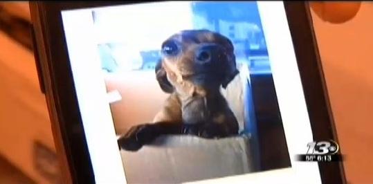11.14.13 - Nurses Care for Patient's Dog2