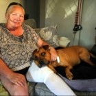 11.2.13 - Pit Bull Saves Woman from Attack