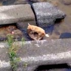 Dog Plays Fetch by Himself in a Creek