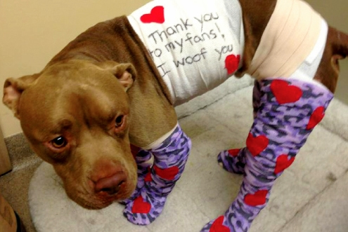 Firework Dog Indy Makes Complete Recovery