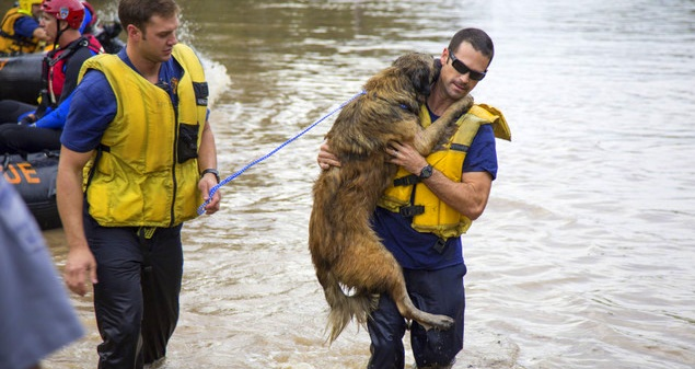 Dog Rescued in Flood Reunited with Family