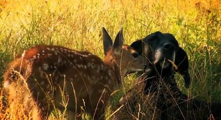 Dog and Deer's Five-Year Friendship