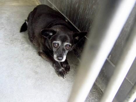 11.27.13 - Black Chihuahua