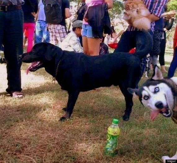 11.27.13 - Dog Photobombs13