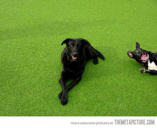 11.27.13 - Dog Photobombs14