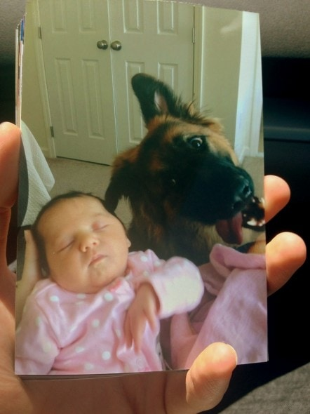 11.27.13 - Dog Photobombs2