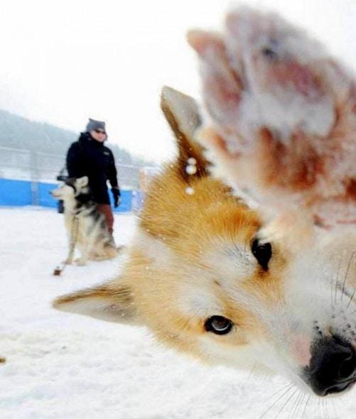 11.27.13 - Dog Photobombs20
