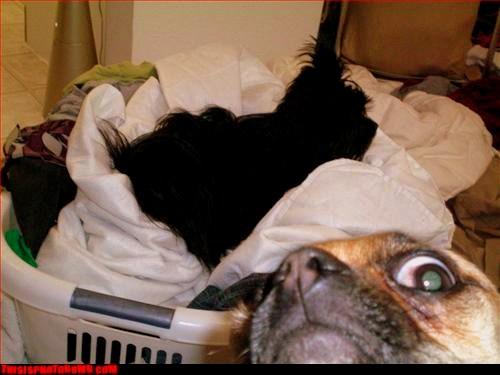 11.27.13 - Dog Photobombs31