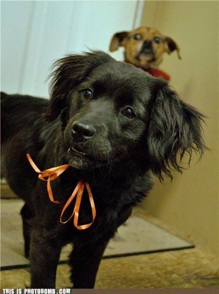 11.27.13 - Dog Photobombs35
