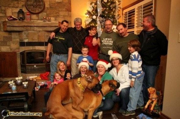 11.27.13 - Dog Photobombs5