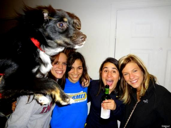 11.27.13 - Dog Photobombs7