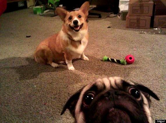 11.27.13 - Dog Photobombs8