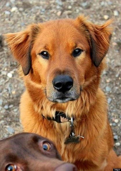 11.27.13 - Dog Photobombs9