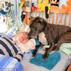 Germans Outraged by Government's Demand of Comatose Boy's Dog