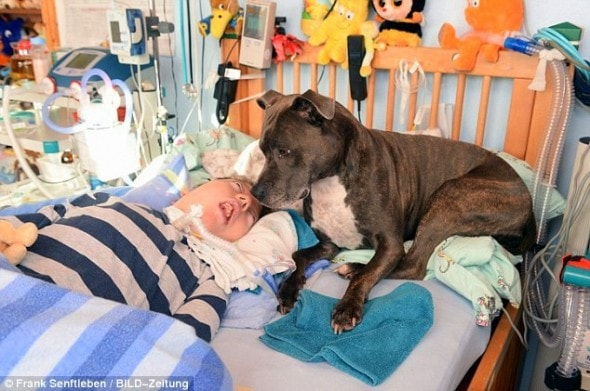11.29.13 - Germans Demand Comatose Boy's Dog1