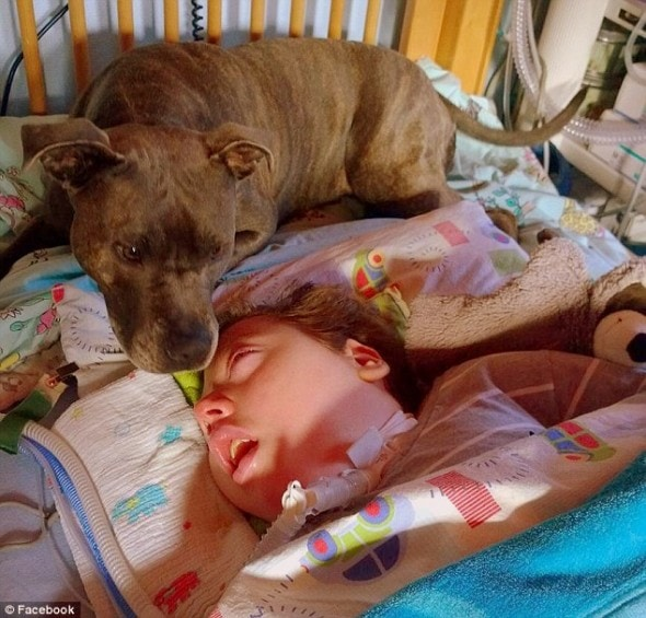 11.29.13 - Germans Demand Comatose Boy's Dog2